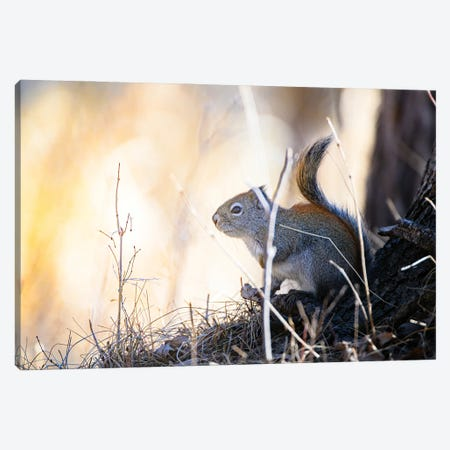 Looking For The Sun Canvas Print #NRV468} by Nik Rave Canvas Artwork