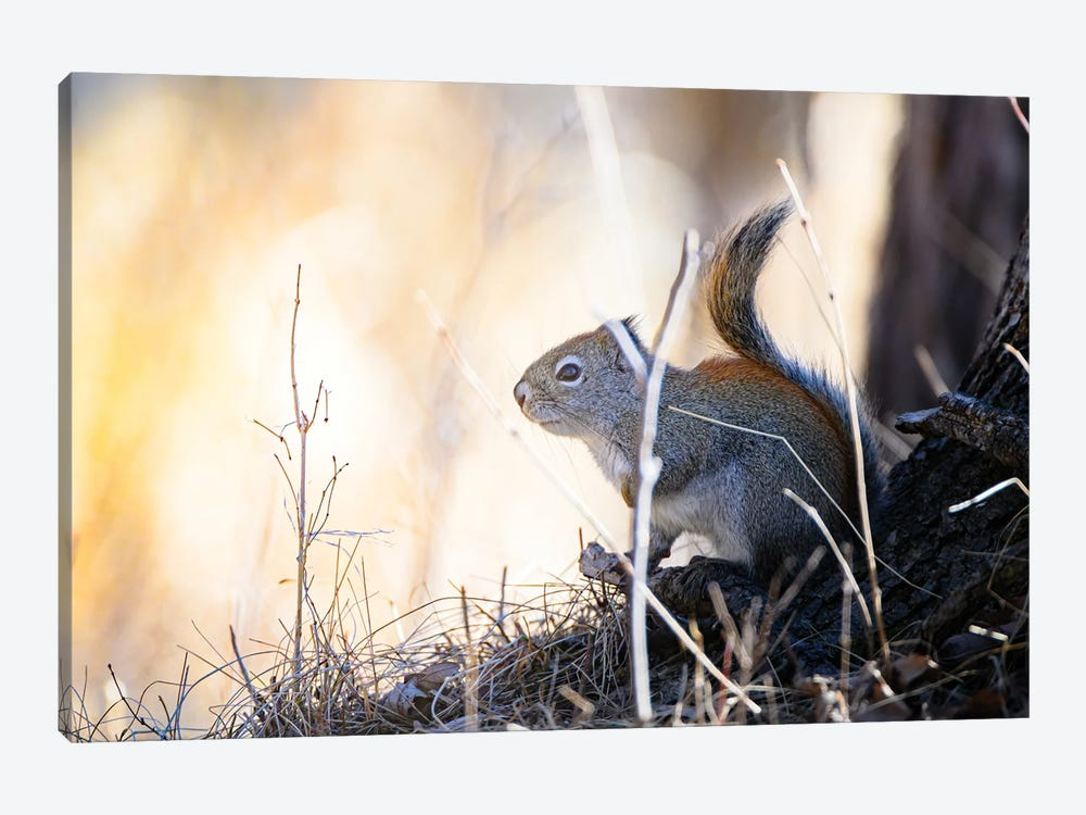 Looking For The Sun by Nik Rave 1-piece Canvas Print