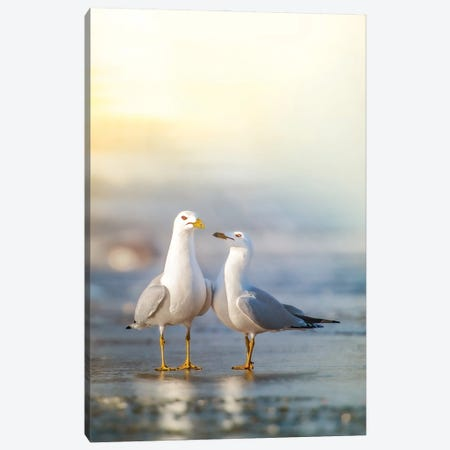 Love Is In The Air Canvas Print #NRV469} by Nik Rave Canvas Art