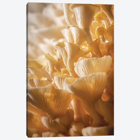 Mushroom World Canvas Print #NRV477} by Nik Rave Canvas Art