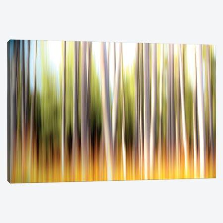 Prairie Fire Grass Canvas Print #NRV480} by Nik Rave Canvas Art