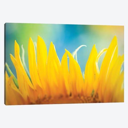 Sunflower Fire Canvas Print #NRV485} by Nik Rave Canvas Print