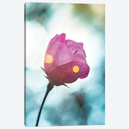 The Bloom Of Morning Freshness Canvas Print #NRV487} by Nik Rave Canvas Art Print