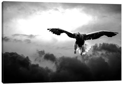 Glorious Stellers Eagle In Black And White Canvas Art Print