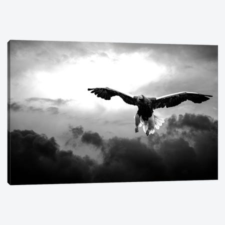 Glorious Stellers Eagle In Black And White 3-Piece Canvas #NRV48} by Nik Rave Canvas Wall Art
