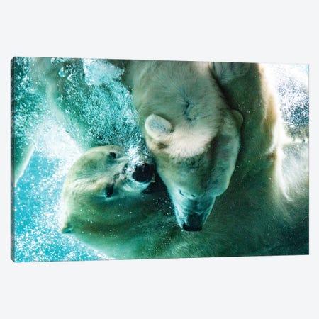Polar Bears Fighting Underwater Close Up Canvas Print #NRV49} by Nik Rave Canvas Art