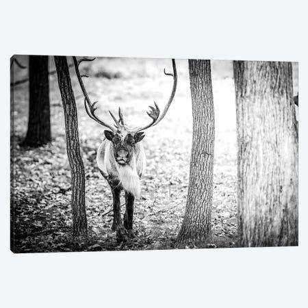 Caribou Running Towards Canvas Print #NRV53} by Nik Rave Canvas Art Print