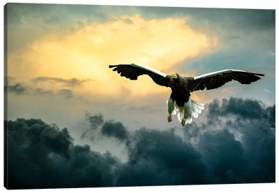 Glorious Stellers Eagle Canvas Art Print