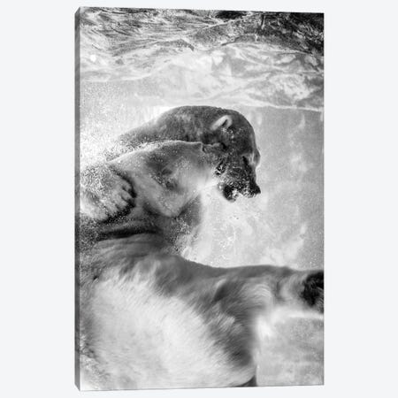 Polar Bears Fighting Underwater In Black And White Canvas Print #NRV56} by Nik Rave Canvas Artwork