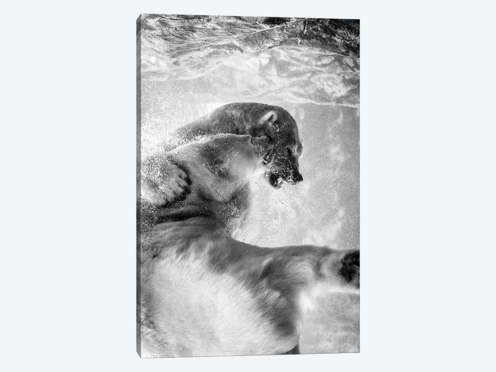 Polar Bears Fighting Underwater In Black And White by Nik Rave 1-piece Canvas Art Print