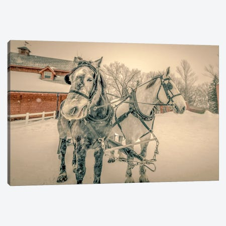 Winter Harnessed Horses In Black And White Canvas Print #NRV5} by Nik Rave Canvas Art
