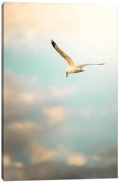 Hunting Seagull Up Down Canvas Art Print