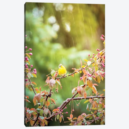 Wet Yellow Bird Under Rain Canvas Print #NRV63} by Nik Rave Canvas Artwork