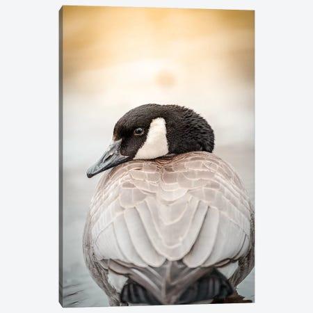 Goose Portrait Up Close Canvas Print #NRV64} by Nik Rave Canvas Print