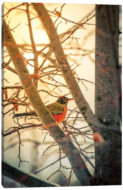 Sun Robin And Tree Canvas Art Print