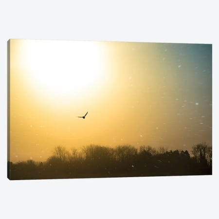 Bird Flying Through Blizzard Canvas Print #NRV66} by Nik Rave Canvas Print