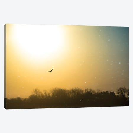 Bird Flying Through Blizzard Canvas Print #NRV66} by Nik Rave Canvas Print