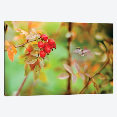 Honeybird Red And Green Canvas Print #NRV68} by Nik Rave Canvas Artwork