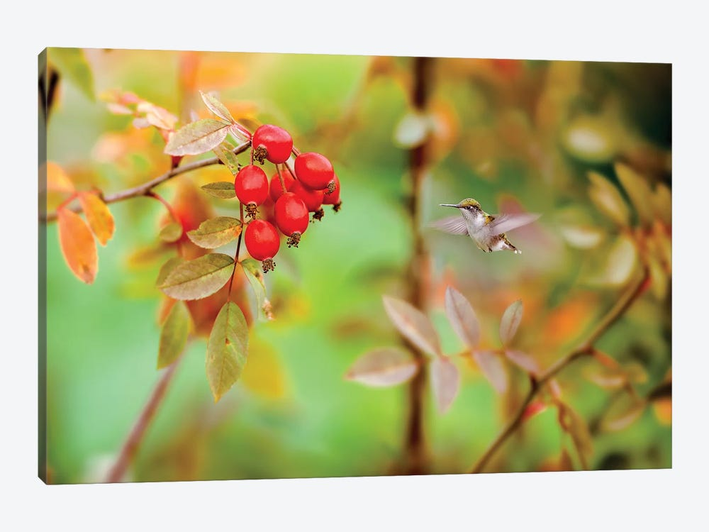 Honeybird Red And Green by Nik Rave 1-piece Canvas Art