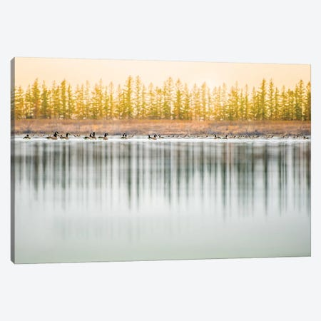 Low Angle, Geese Water Reflection 3-Piece Canvas #NRV69} by Nik Rave Canvas Artwork