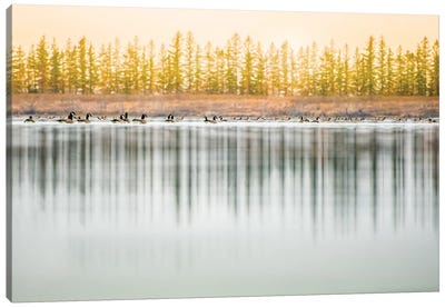 Low Angle, Geese Water Reflection Canvas Art Print