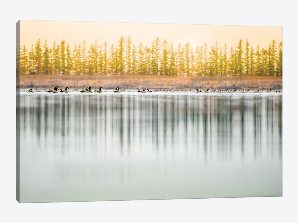 Low Angle, Geese Water Reflection by Nik Rave 1-piece Canvas Art Print