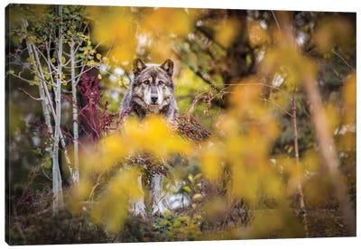 Timber Wolf Portrait Canvas Art Print
