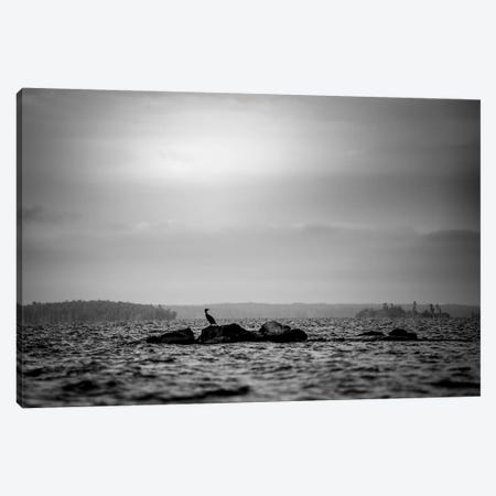 Lonely Bird On The Rock In Black And White Canvas Print #NRV70} by Nik Rave Art Print