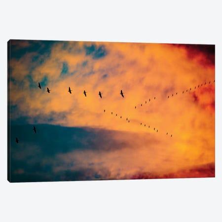 Burning Skies Birds Canvas Print #NRV71} by Nik Rave Art Print