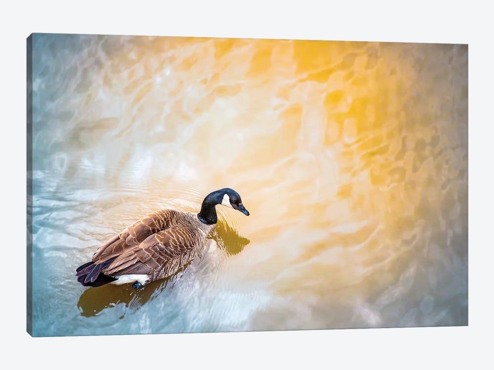 Gold River Goose by Nik Rave 1-piece Canvas Art Print