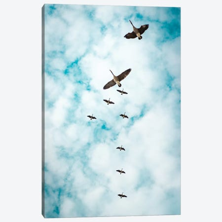 Immigration Of Canada Geese Canvas Print #NRV75} by Nik Rave Canvas Wall Art