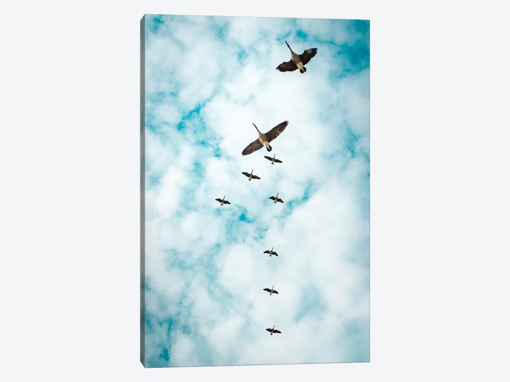 Immigration Of Canada Geese by Nik Rave 1-piece Canvas Wall Art