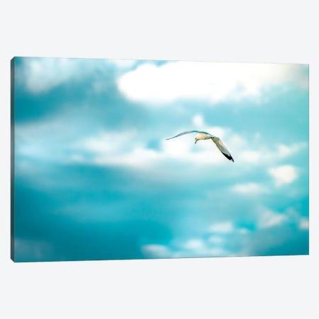 Milky Sky Shooting Seagull Canvas Print #NRV76} by Nik Rave Canvas Artwork