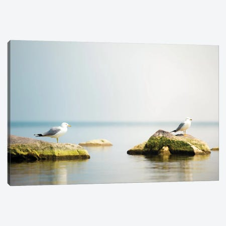 Seagull Waterscape Creative Canvas Print #NRV77} by Nik Rave Canvas Wall Art