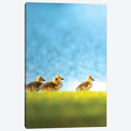 Chicks Or Follow The Leader Canvas Print #NRV78} by Nik Rave Canvas Art Print