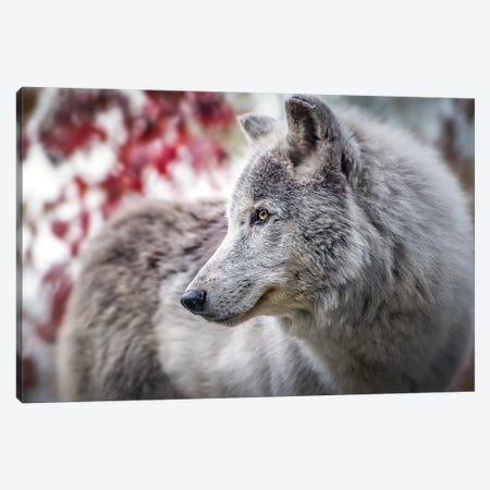 Grey Timber Wolf Portrait Canvas Print #NRV7} by Nik Rave Canvas Art