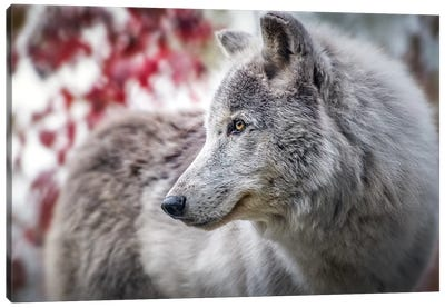 Grey Timber Wolf Portrait Canvas Art Print