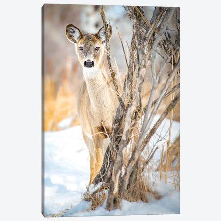 Hiding But Curious Baby Deer Canvas Print #NRV81} by Nik Rave Canvas Artwork