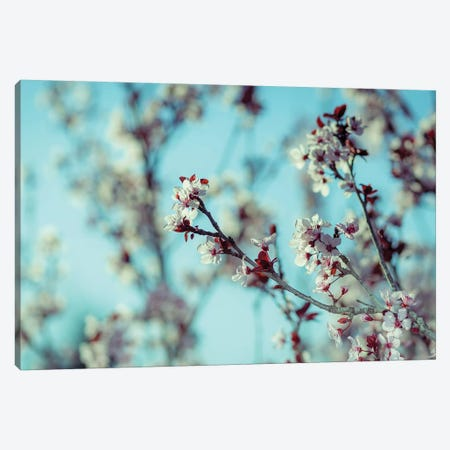 Blooming Tree Canvas Print #NRV82} by Nik Rave Canvas Wall Art