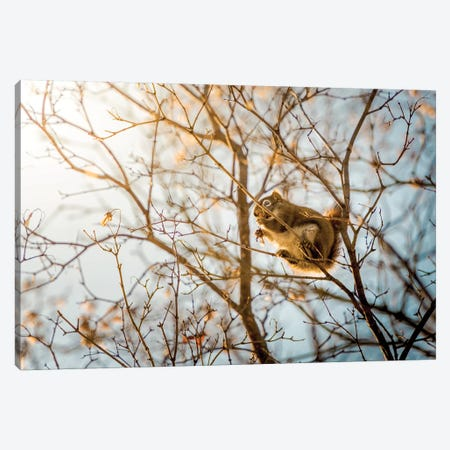 Squirrel Sitting On The Branches Canvas Print #NRV85} by Nik Rave Canvas Art Print