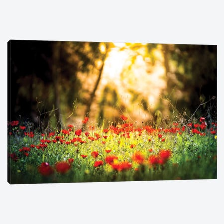 Tulips Field In A Sunlight 3-Piece Canvas #NRV86} by Nik Rave Art Print
