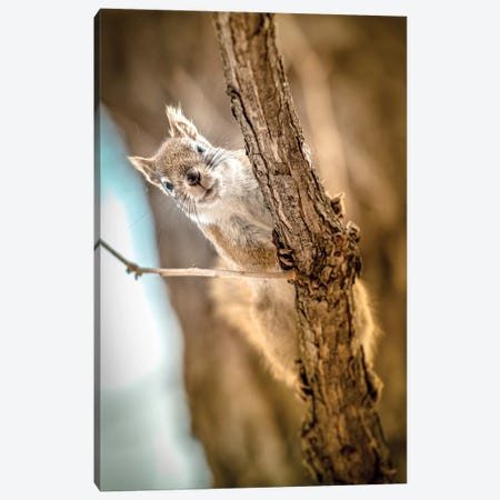 Squirrel Looking To The Camera Close Up Canvas Print #NRV89} by Nik Rave Canvas Art
