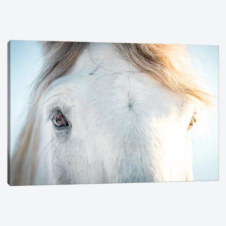 White Horse Eyes Canvas Print #NRV90} by Nik Rave Art Print