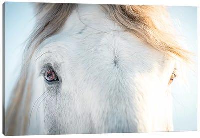 White Horse Eyes Canvas Art Print