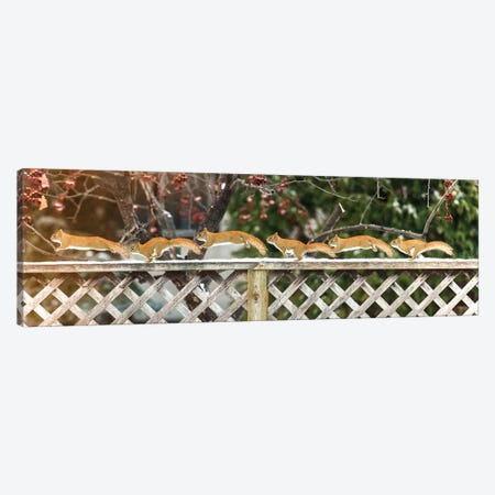 Sequence Of Running Squirrel Canvas Print #NRV94} by Nik Rave Canvas Artwork