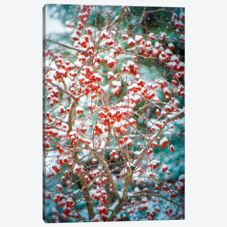 Red Wild Apples Snowfall 3-Piece Canvas #NRV99} by Nik Rave Canvas Print
