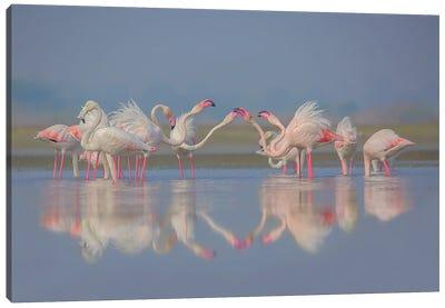 Flamingo Festival Blue Canvas Art Print