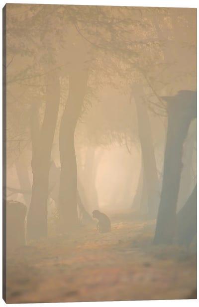 Macaque In Mist Canvas Art Print