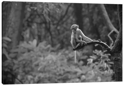 Macaques Tree Bw Canvas Art Print