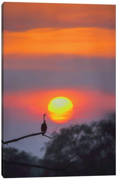 Darter In Sunset Canvas Art Print
